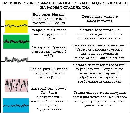 Электрические ритмы головного мозга