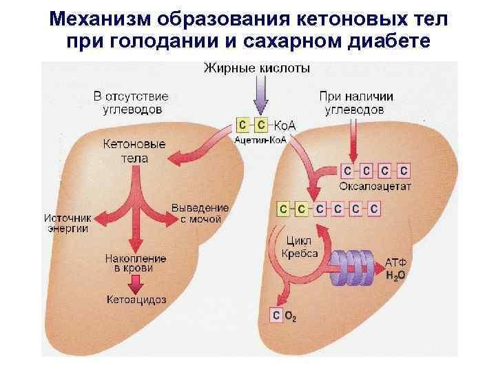 Образование кетонов