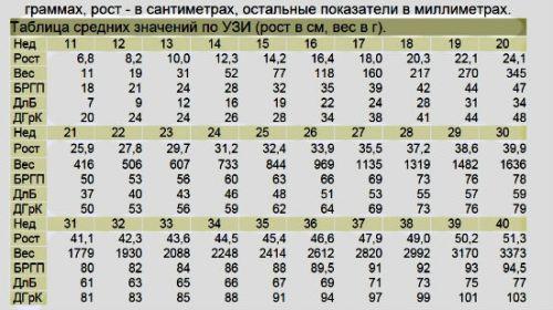 Таблица размеров плода