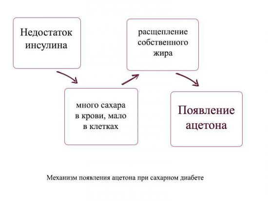 Механизм появления ацетона