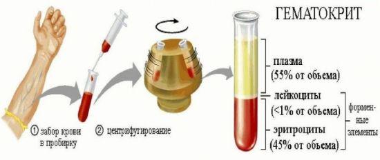 Выделение гематокрита