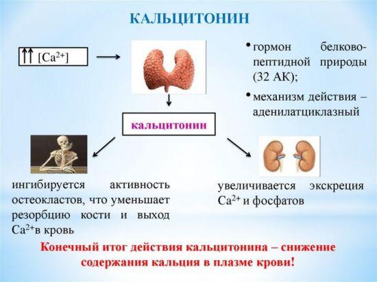 Кальцитонин