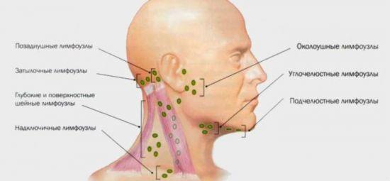 Лимфатическая система шеи