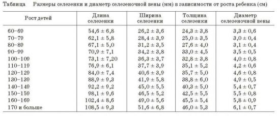 Размеры селезенки