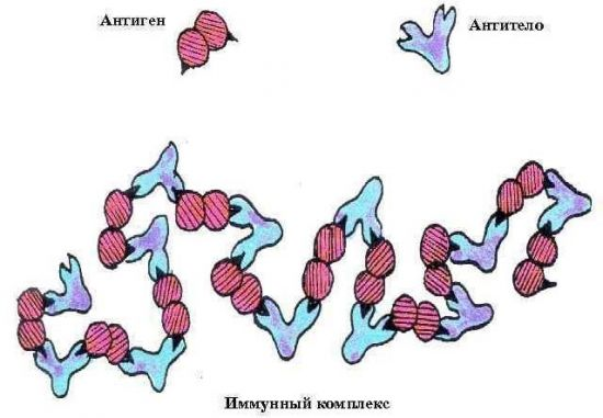 Иммунный комплекс
