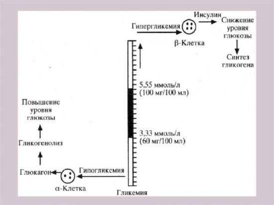 Гипергликемия и гипогликемия