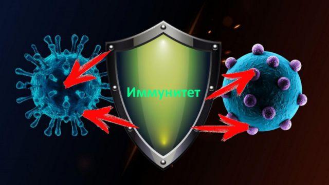 Иммунитет и вирусы