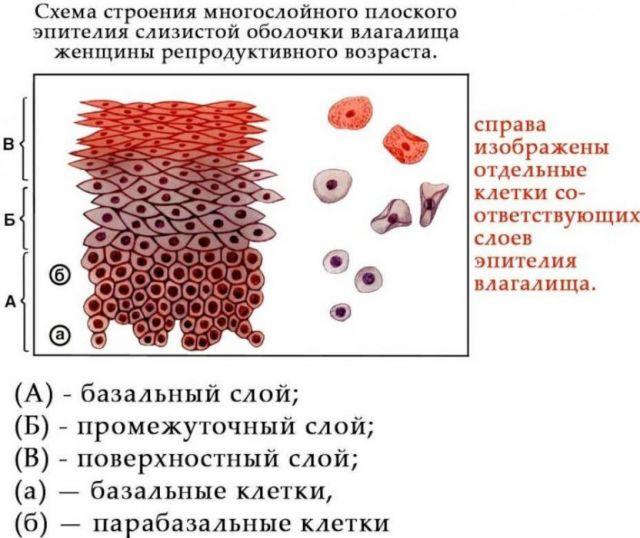 Плоский эпителий