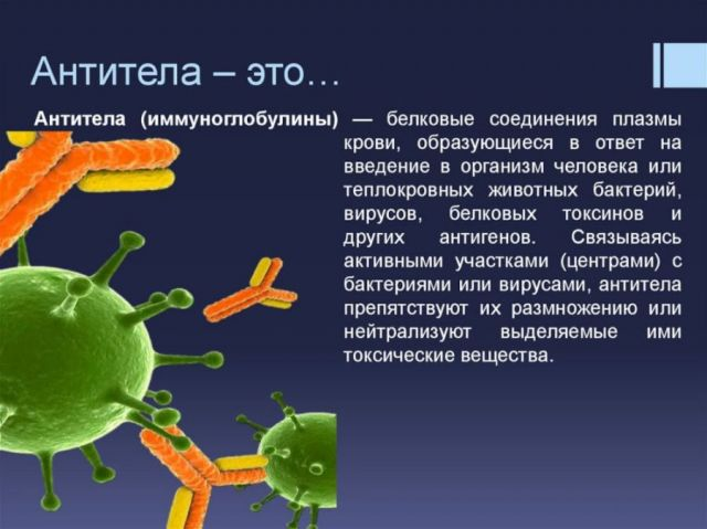 Об антителах