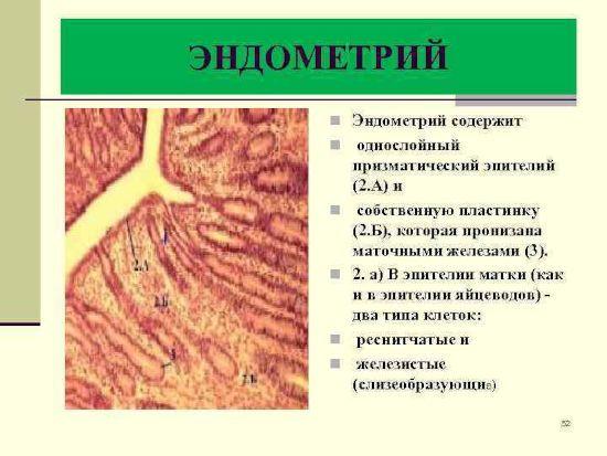 Эндометрий