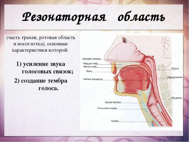 Резонаторная область