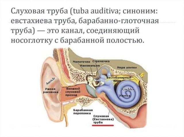 Слуховая труба