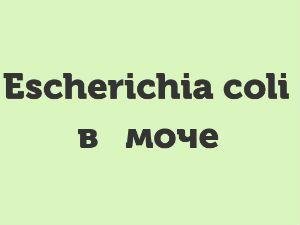 Escherichia coli в моче