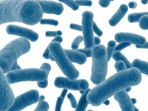 Eubacterium spp в мазке