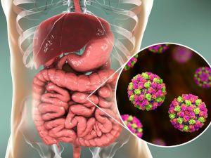 Вирус в желудке