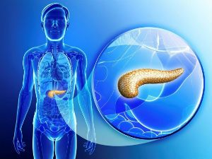 Параметры поджелудочной железы на узи норма у взрослых