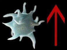 Повышение уровня тромбоцитов в крови